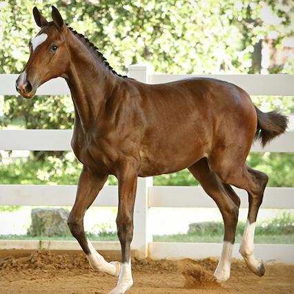 Foals Isadora
