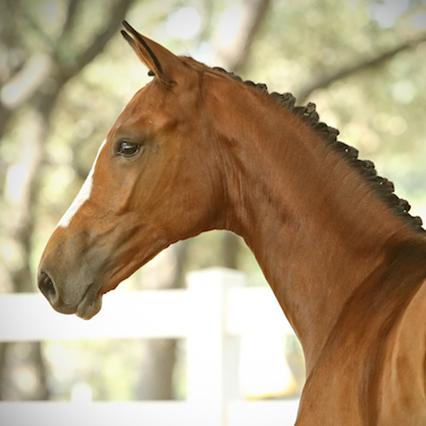 Foals Kat