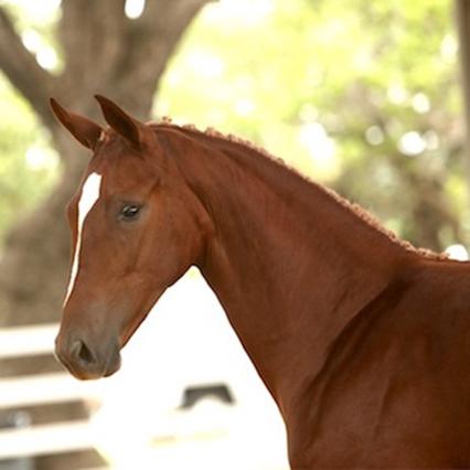 Foals Quiana