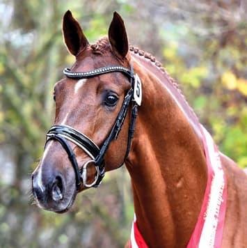 stallions borsalino