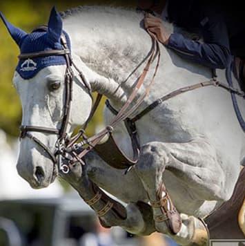 stallions dino w