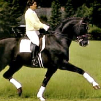 stallions donnerhall