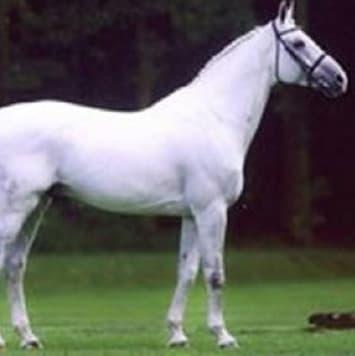 stallions eurocommerce berlin