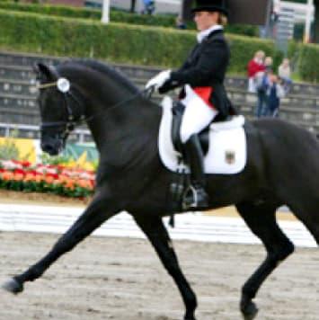 stallions french kiss