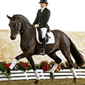 stallions furstenball