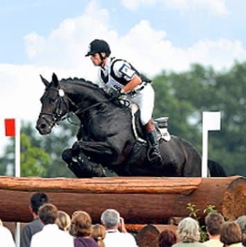 stallions grafenstolz