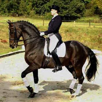 stallions plaisir d amour
