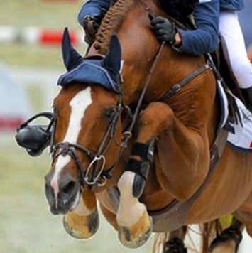 stallions romanov ii