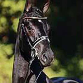 stallions sarkozy